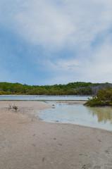 Surreal Landscape: Dry Forest