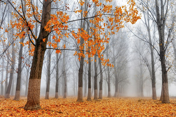 An autumn tree in a forest.