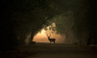 Silhouette of a spotted deer stag in a forest.