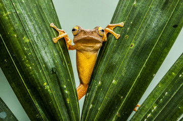 A frog climbing leaves.