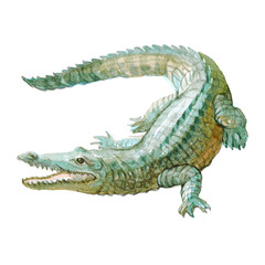 Watercolor crocodile, alligator tropical animal isolated on a white background illustration.