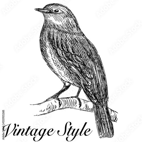 U0026quot;sketch Tattoo Vintage Bird Sitting On A Branchu0026quot; Stock Image And Royalty-free Vector Files On ...