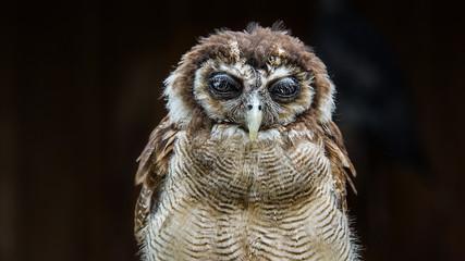 An owl resting.