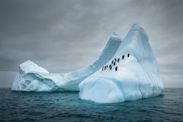 Penguins on an iceberg in the Antarctic.