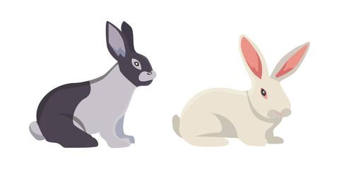 vector illustration of cartoon rabbits different breeds. Fine bunnys for veterinary design
