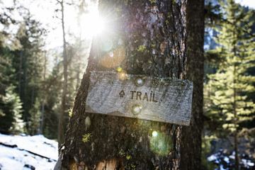 Close-up of trail sign on tree trunk in forest