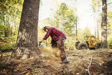 Lumberjack cutting tree trunk with chainsaw in forest