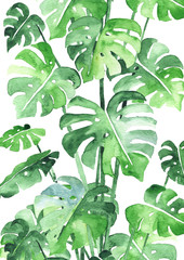 Fotobehang Aquarel Natuur Monstera leaves background. Beautiful watercolor pattern made of tropical plant leaves. Ideal for prints, decoration and interior. Isolated on white