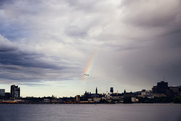Seagull flying through Rainbow over river by city