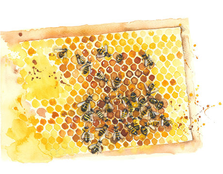 Honeycomb with bees watercolor painting illustration isolated on white background