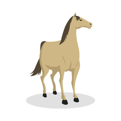 horse color illustration design