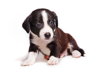 Cute puppy not purebred sad look. Pets need our support and care.