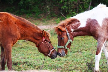 Two horses standing and touch each others noses