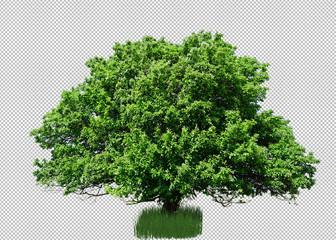 Baum Freigestellt.
