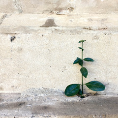 tree cement green background wallpaper nature texture life concrete leaf brick