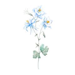 Watercolor blue akilegiya flower