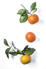 Oranges on light background