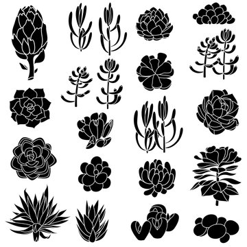 Isolated black silhouettes of succulents