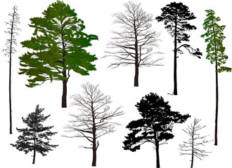 nine collection trees isolated on white