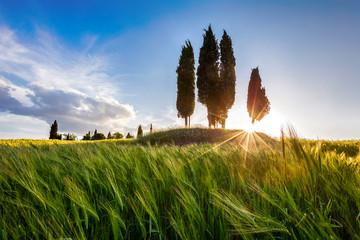 Gorgeous Tuscany sunset