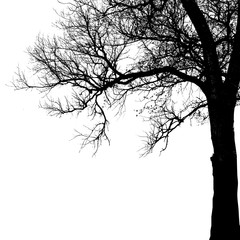Realistic oak tree silhouette (Vector illustration).