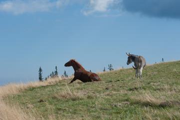 Pferd steht auf und Esel sieht zu