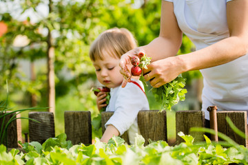 Mother and child picking up radishes