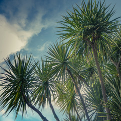 Aluminium Prints Palm tree Palm Trees Against Sky