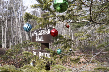 Appalachian trail sign and tree