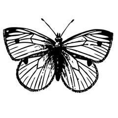 красивая бабочка на белом фоне эскиз татуировки