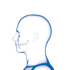 Teeth, Dental Model