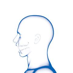 Teeth, Dental Model, Open Mouth