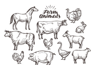 Farm, vector sketch. Collection animals such as horse, cow, bull, sheep, pig, rooster, chicken, hen, goose, rabbit, turkey, goat