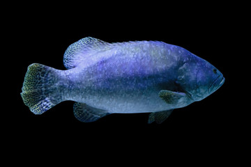 Fish isolated on black background