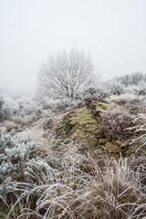 Campagne givrée, givre, blanc, neige
