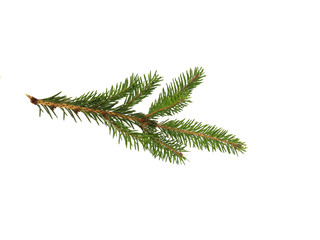 fir branch with green needles on white isolated background