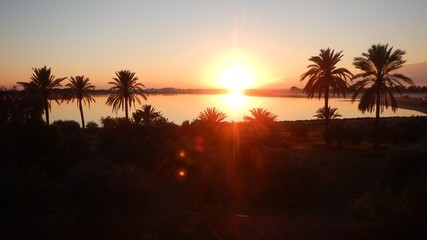 sunrise at larnaka salt lake with palm trees