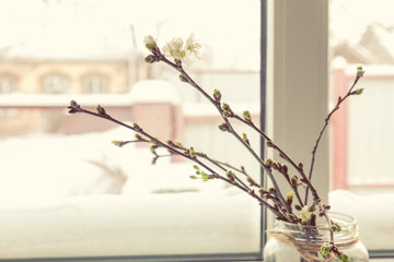 Branch of cherry tree in glass jar on the window sill. In the background, a beautiful winter landscape in snow. Cozy home concept.