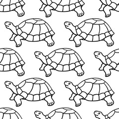 Turtle contour pattern