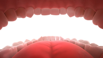 3d rendering of human teeth, open mouth, inside view