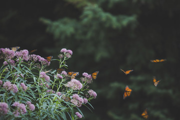 Butterflies flying by plant in park