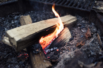 Close-up of campfire in forest