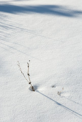 Little branch in the snow near Pahrump, NV
