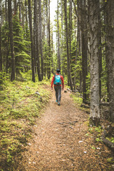 Rear view of man hiking in forest