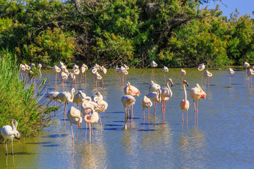 National Park of the Camargue, Provence