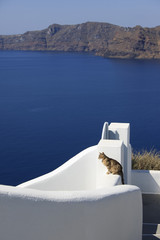Cat on white wall, city of Oia on Santorini Island (part of the Cyclades). Garden gate and white wall. View from above with the dark blue Mediterranean Sea as background (copy space).