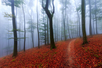 Misty autumn forrest