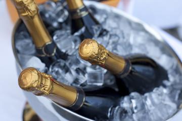 Bottles of Champagne in cooler
