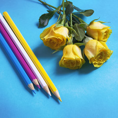 yellow roses with pencils on the blue background