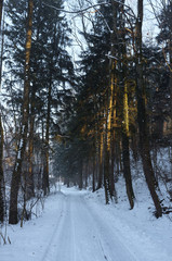 Trees in the winter in a Bavarian forest with snow